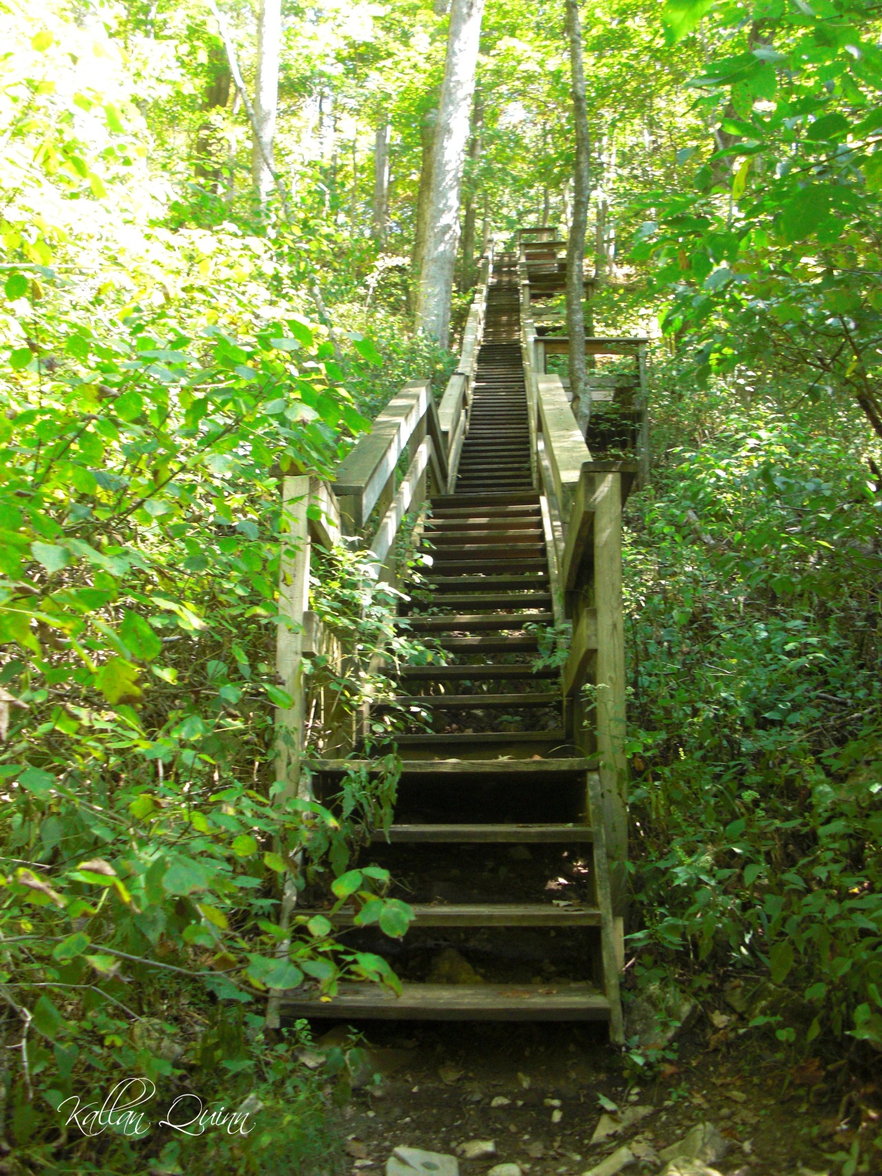 McCormicks Creek Stairs