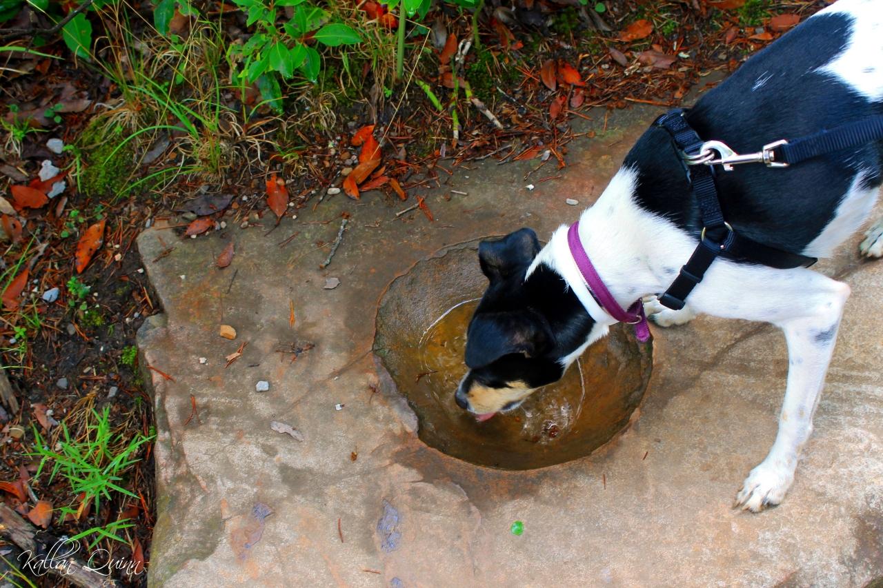 Natural Doggie Bowl