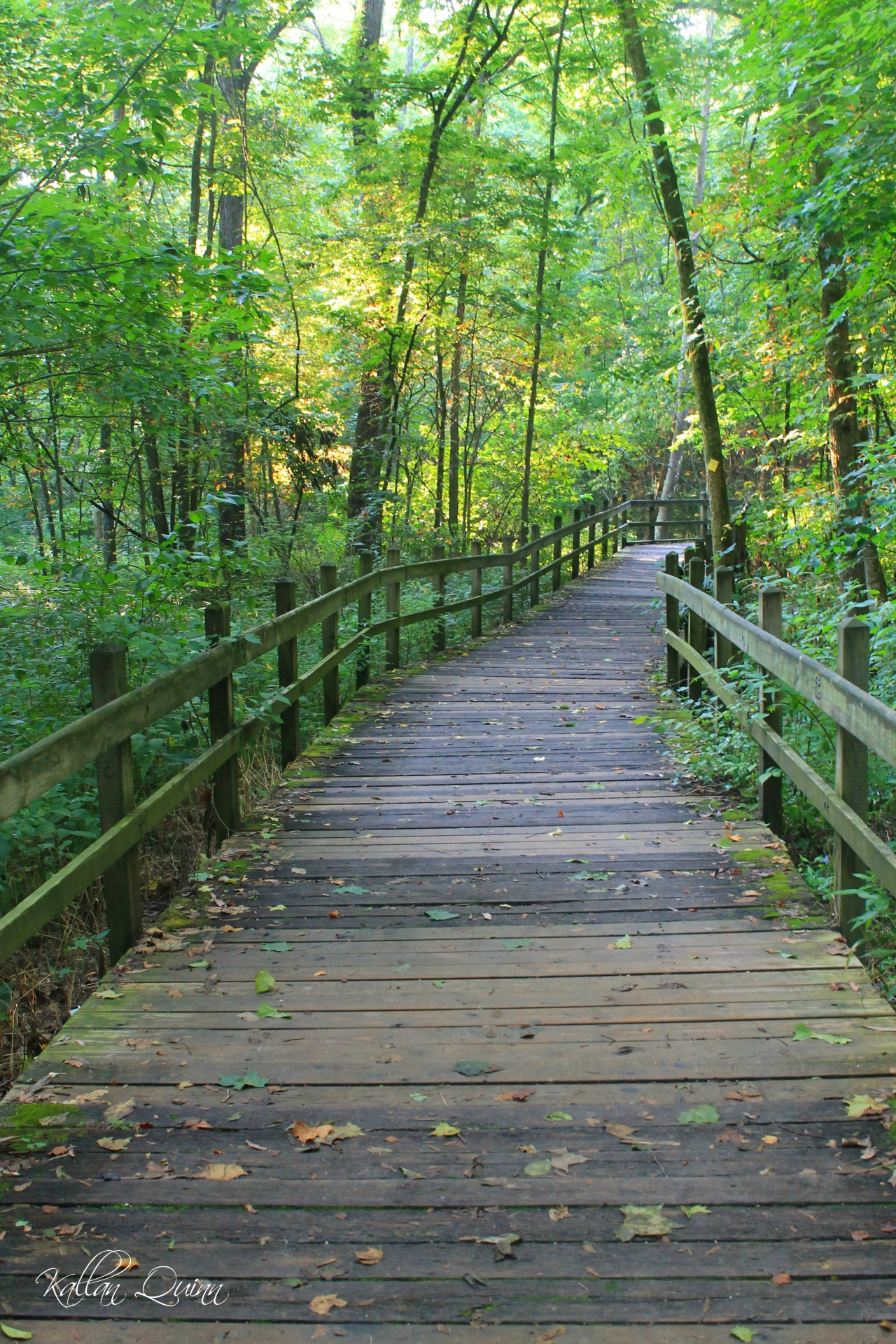 Rock Bridge Boardwalk