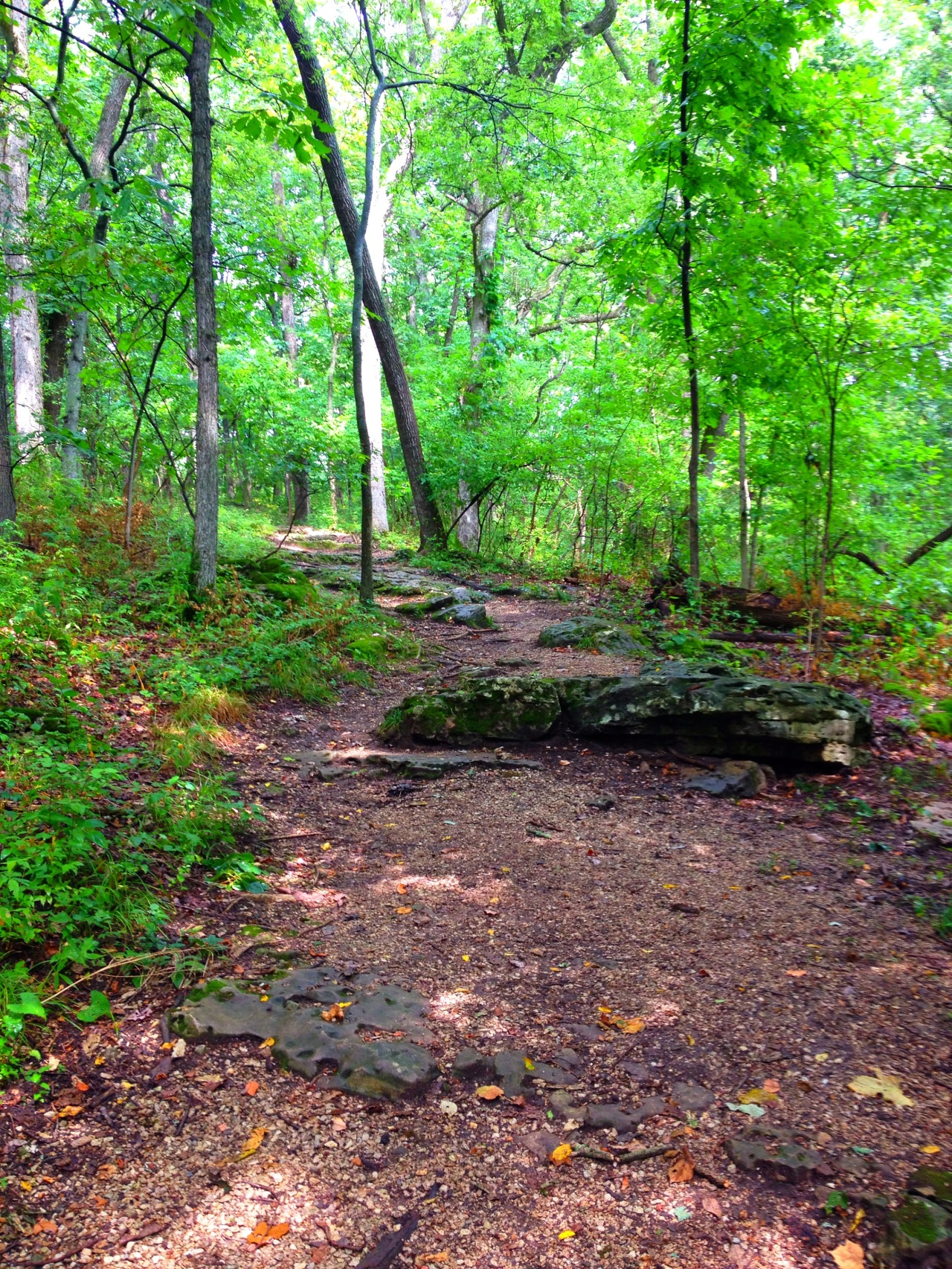 Mastodon State Historic Site (2)