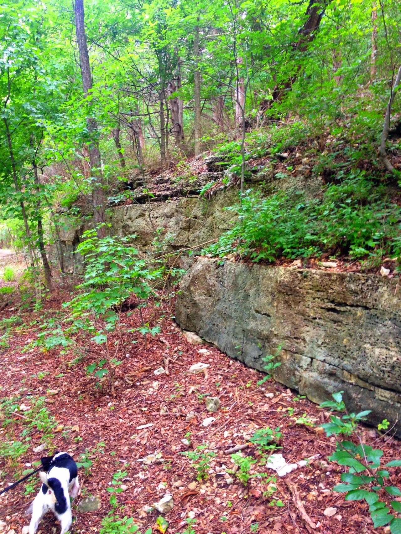 Mastodon State Historic Site (6)