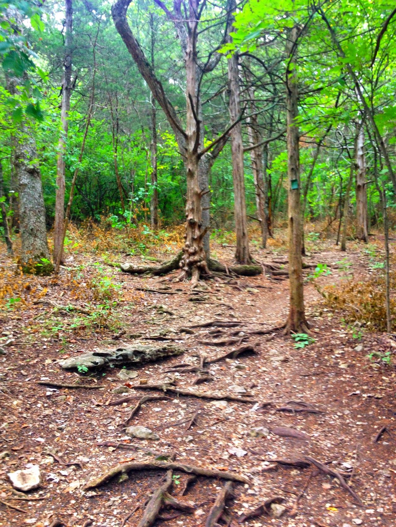 Mastodon State Historic Site (8)