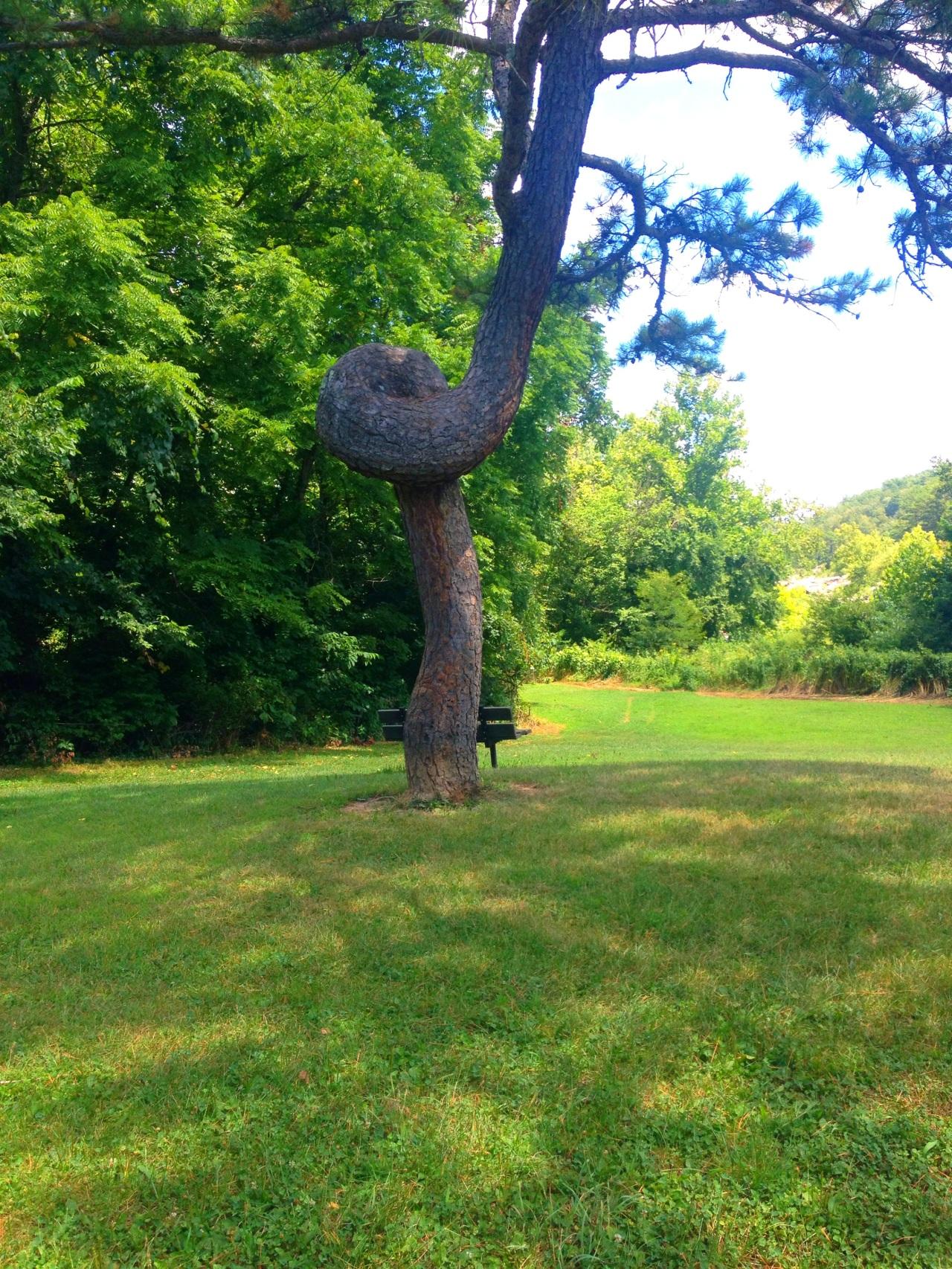Millstream Gardens (2)