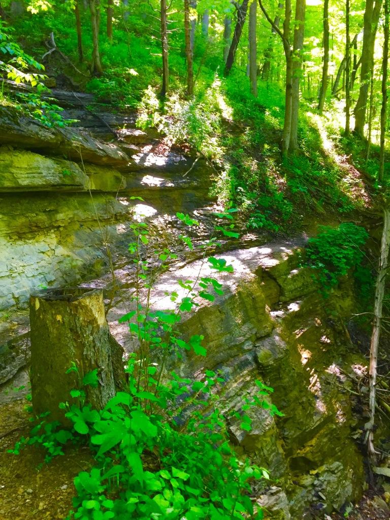 Clifty Falls (19)