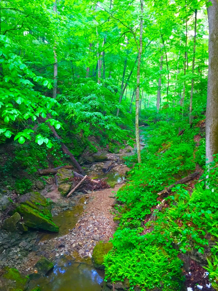 Clifty Falls Trail 7 (1)