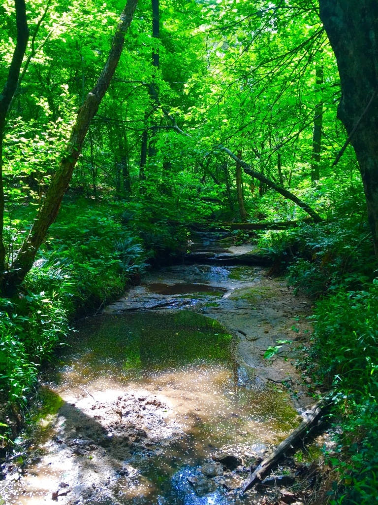 LaBarque Creek (16)