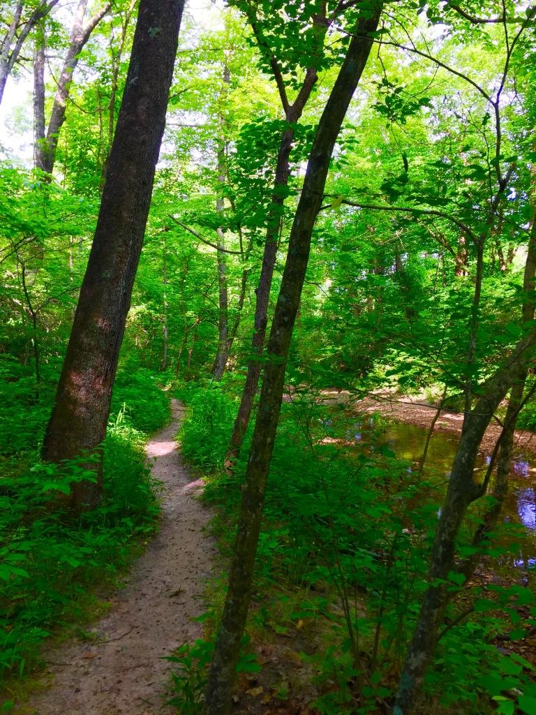 LaBarque Creek (6)