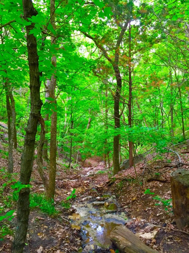 LaBarque Creek (8)