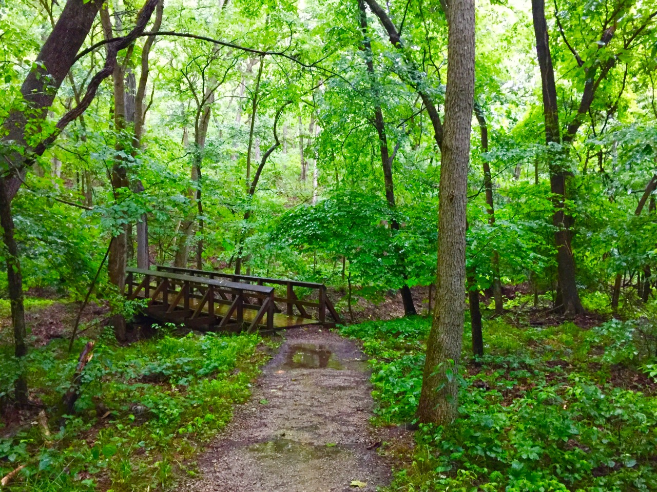 Rockwoods Reservation – Missouri