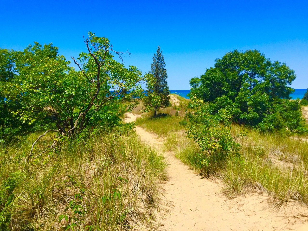 Indiana Dunes (3)