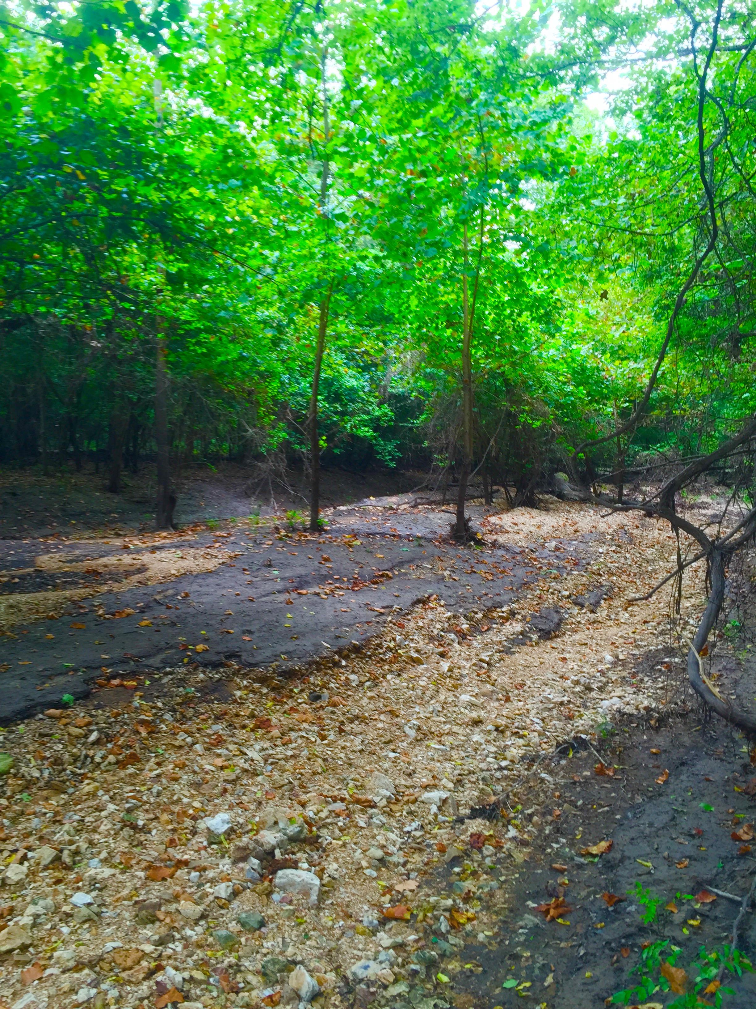 Hidden hollow natural area