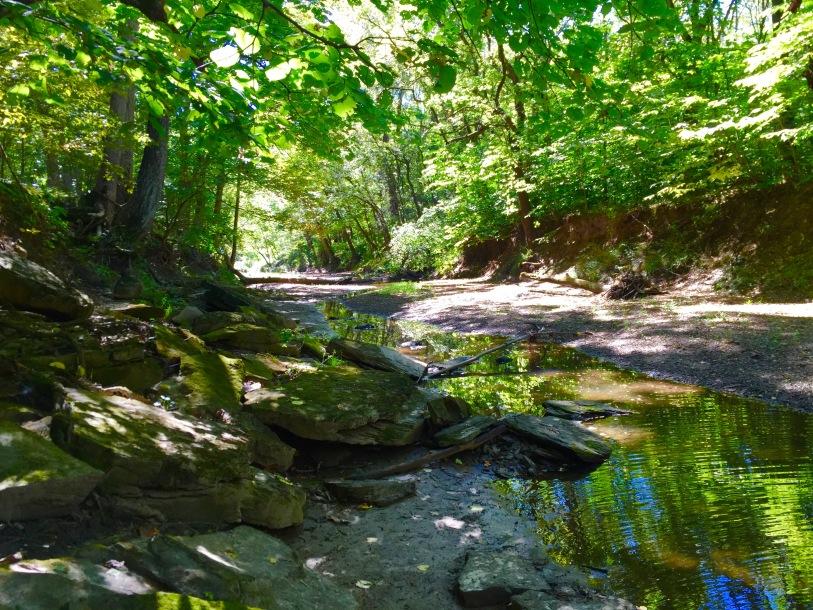 Hidden Springs (4)