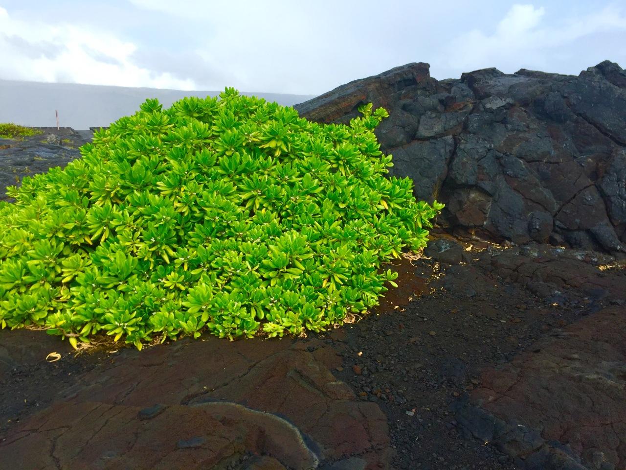 Hawaii (139)