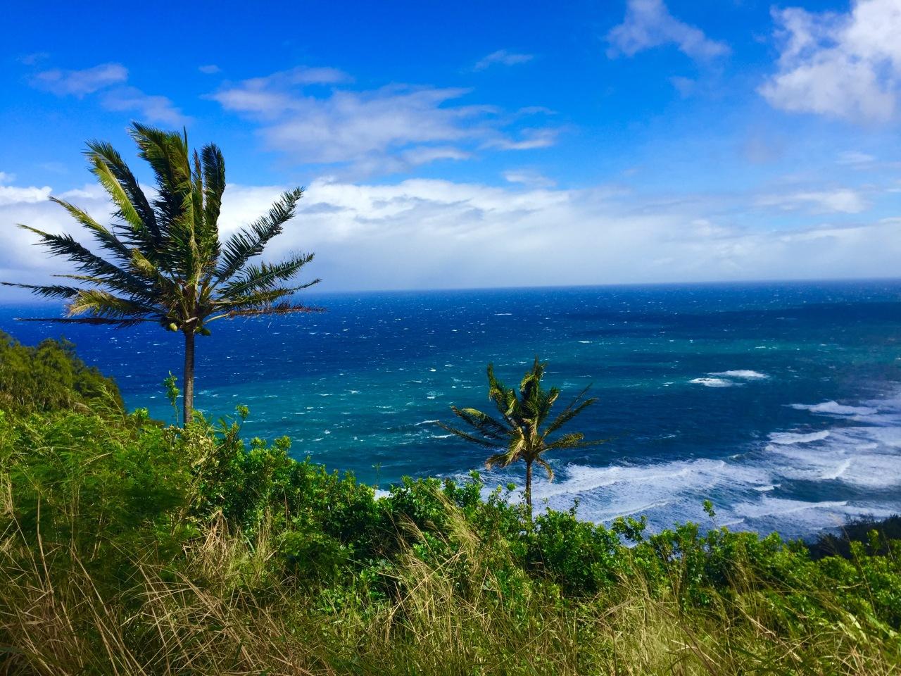 Hawaii (95)