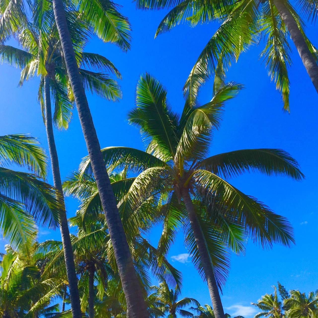 Hawaii (146)