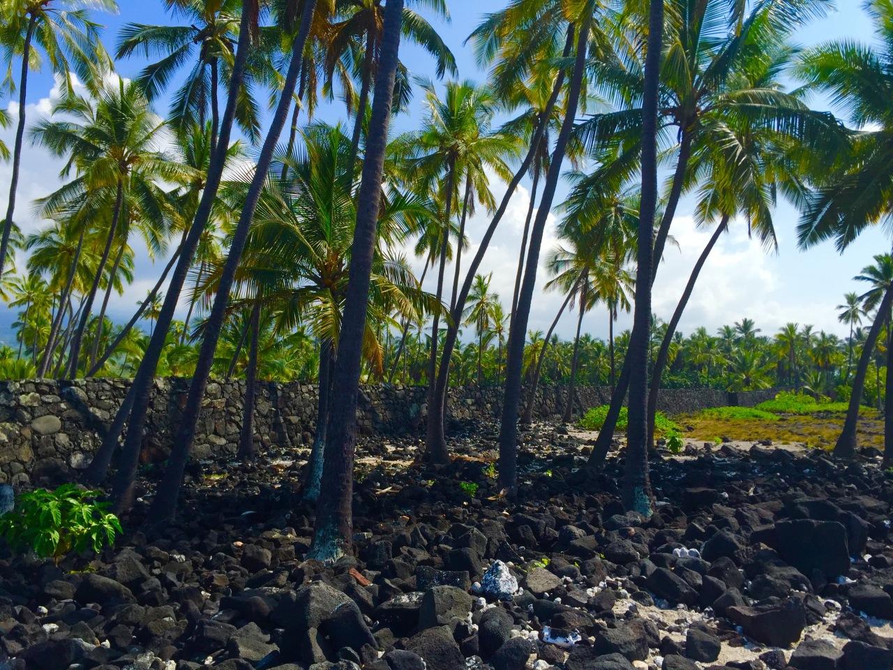 Hawaii (168)