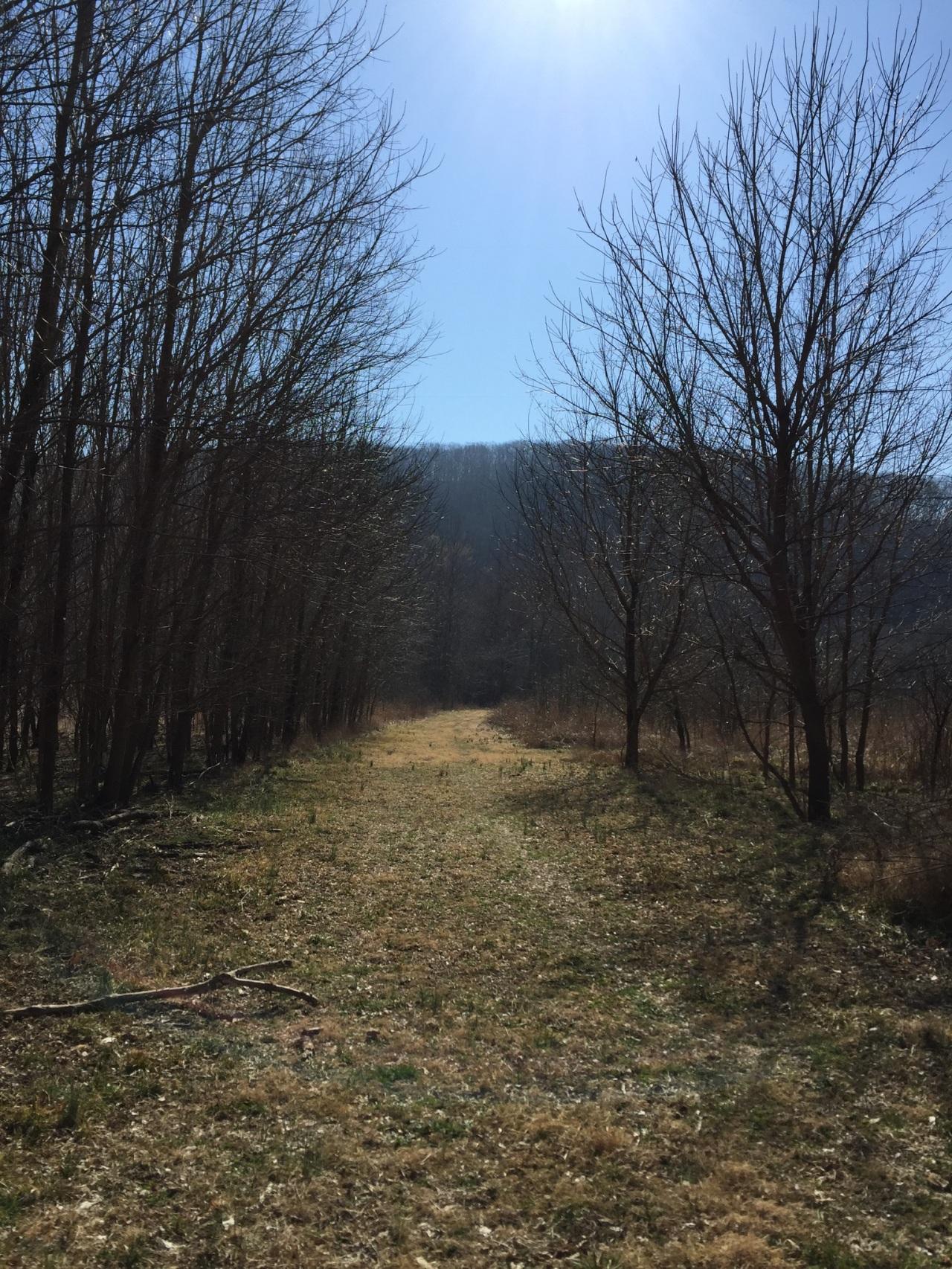 Chubb Trail-33