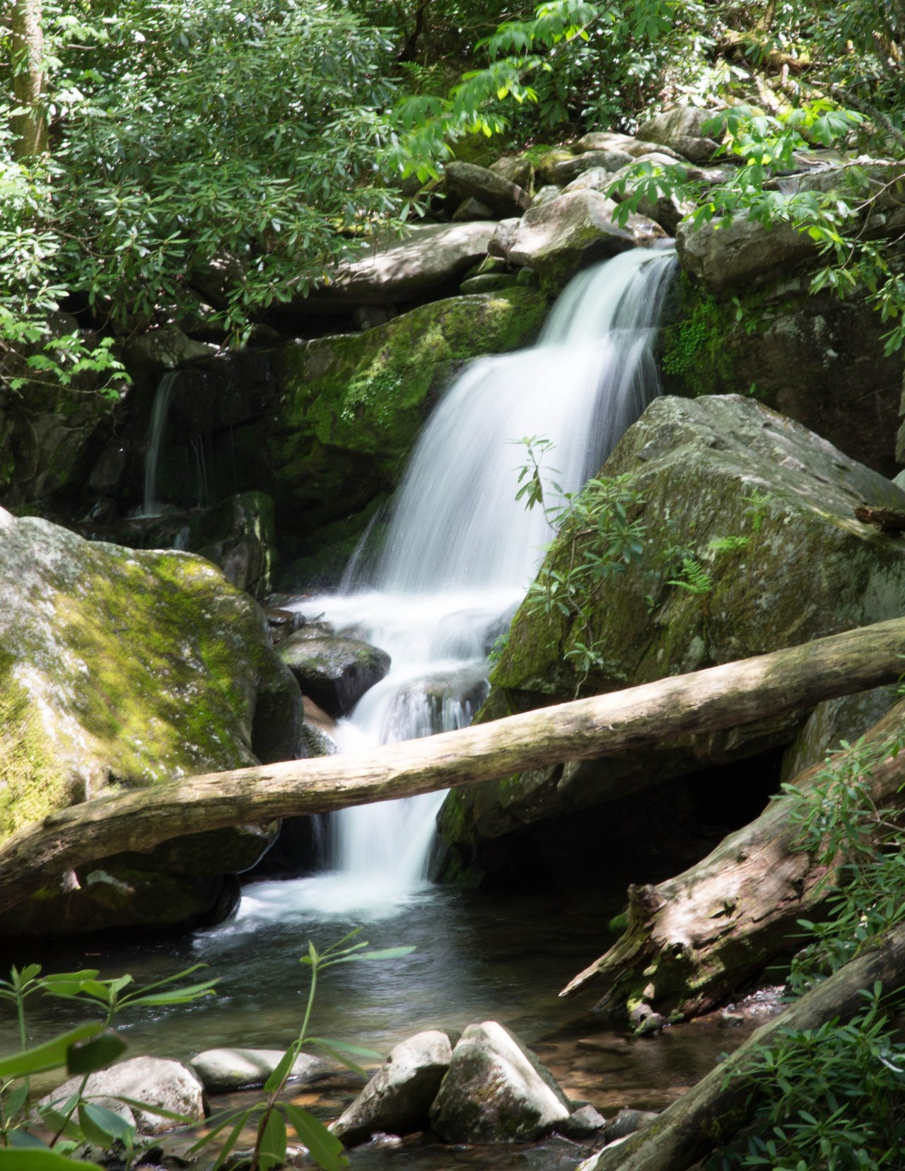 The Great Smoky Mountains – Roaring Fork Motor Trail