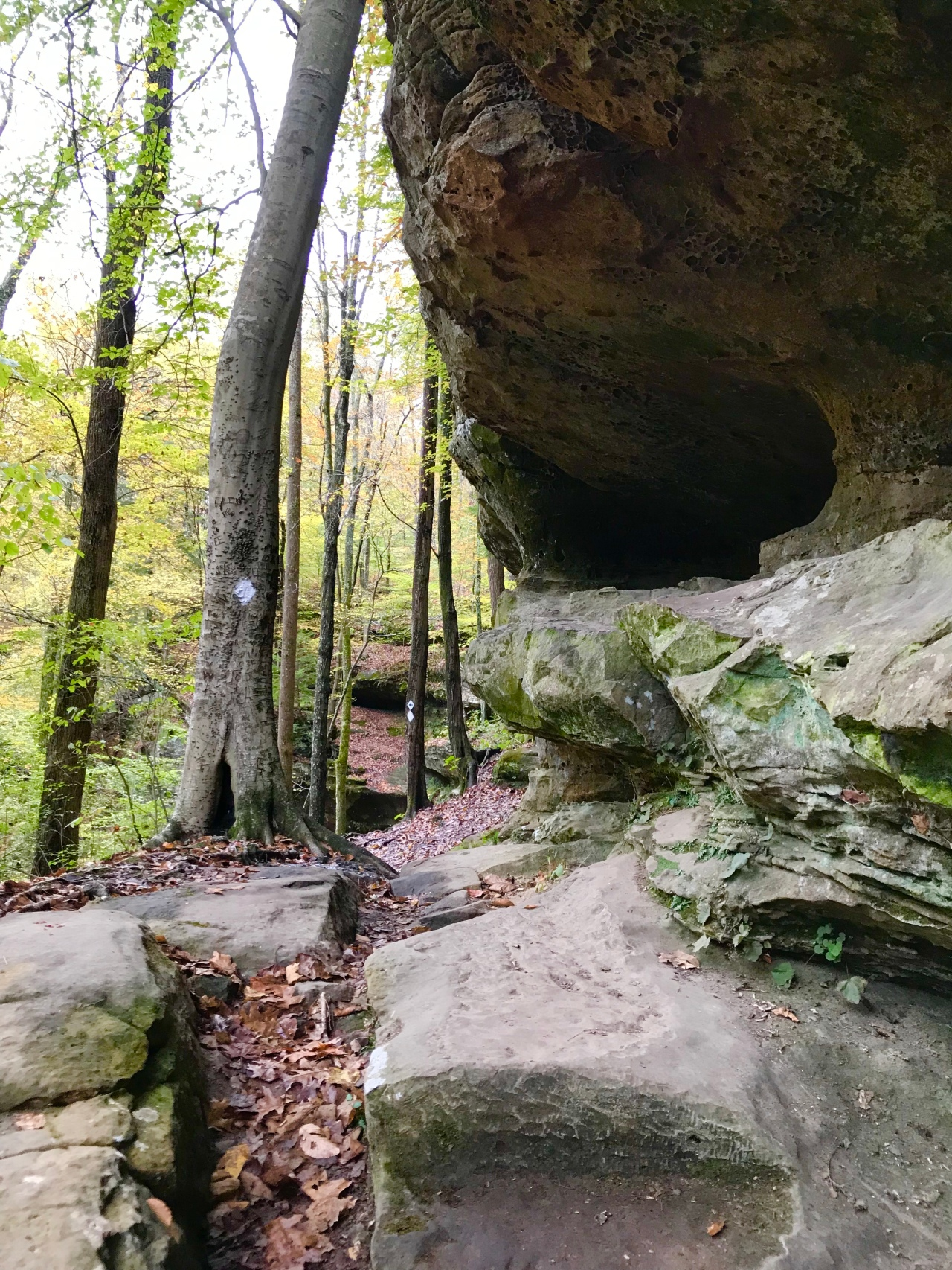 Hemlock Cliffs (16)