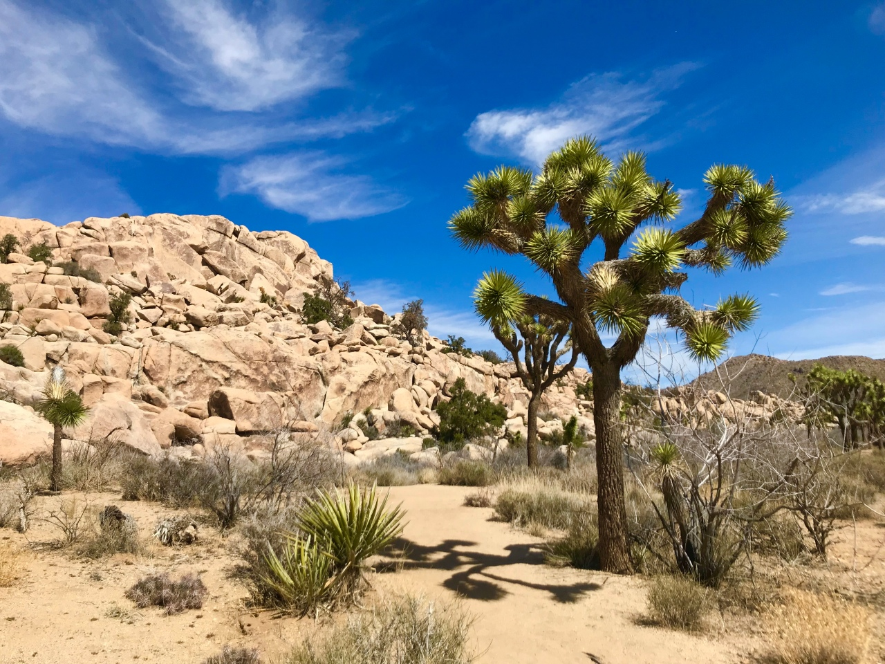 Joshua Tree National Park – California