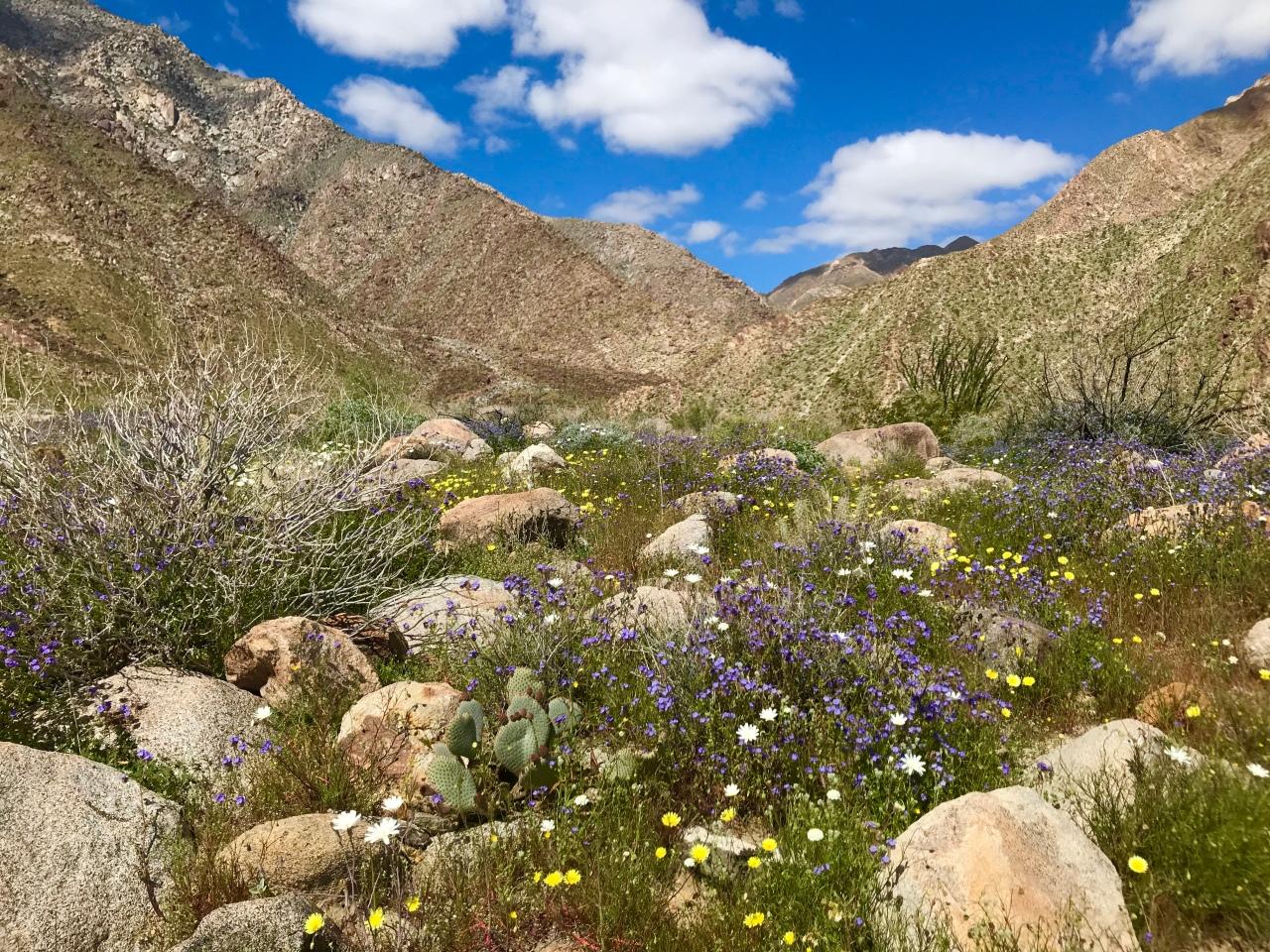 Anza-Borrego Desert State Park –California
