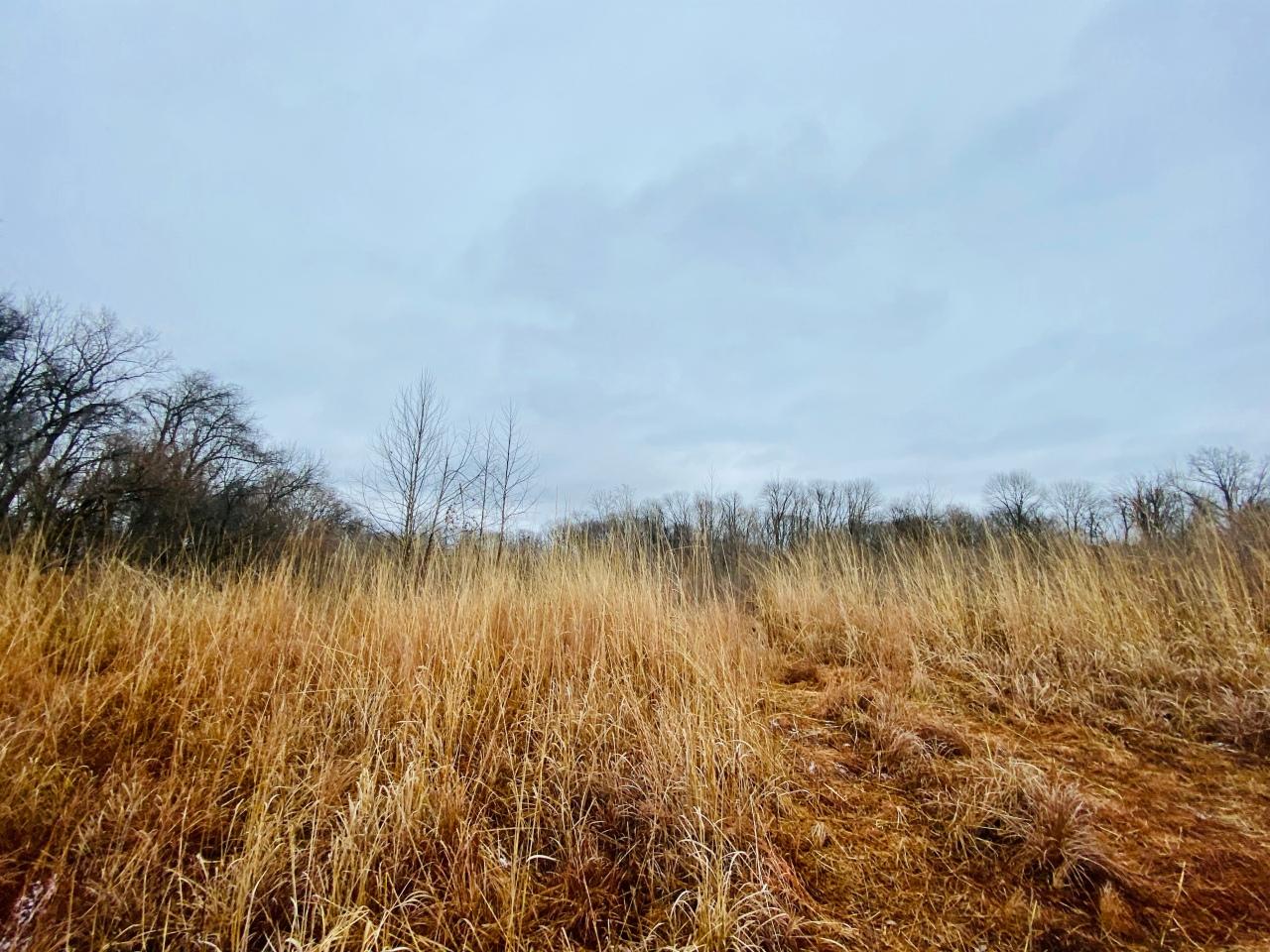 Bohm Woods Nature Preserve –Illinois